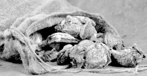 sack-of-oysters-112017